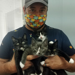Foster dad with mask and 4 kittens