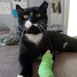 Wilson with a cast